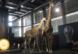 Feciex arranca con más de 90 expositores y una muestra de piezas naturalizadas