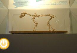Inaugurado el museo de veterinaria en Badajoz