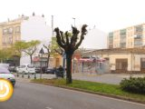 Cabezas pide parar la tala de árboles de Carolina Coronado