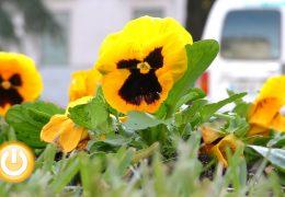 Badajoz renueva su plantas ornamentales para adornar la ciudad en invierno