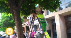 El Ayuntamiento usa unos insectos para acabar con el pulgón