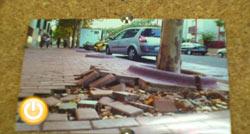 Sosa pide el arreglo de varias aceras de la ciudad levantadas por los árboles