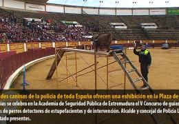 Unidades caninas de la policía de toda España ofrecen una exhibición en la Plaza de Toros