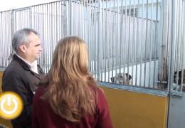 El alcalde visita las obras de la perrera municipal