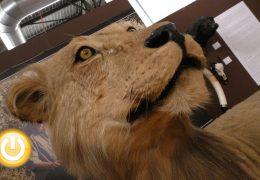 Vuelve FECIEX con una gran exposición de piezas de safari