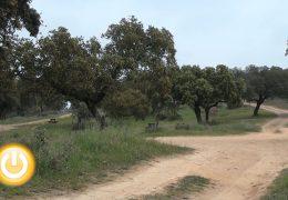 Ávila presenta el plan de gestión del Parque Periurbano Antonio Cuéllar