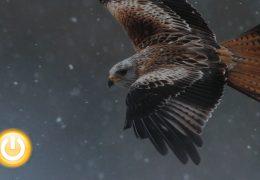 El futuro de las aves comunes se dará a conocer estos días en Badajoz