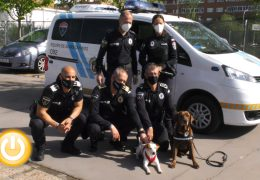 Pipper, el perro influencer que promueve el turismo con mascotas