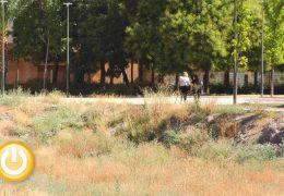 El PSOE asegura que Ronda Norte sigue con los mismos problemas de suciedad, abandono y falta de mantenimiento