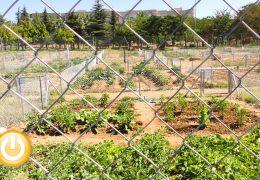 Los huertos urbanos de Suerte de Saavedra empiezan a dar sus frutos
